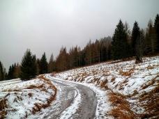 Lungo la forestale CAI228A