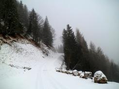Lungo la nuova pista forestale