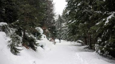 La forestale che conduce fino alla vetta.