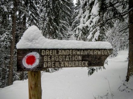 La forestale prosegue in territorio austriaco.