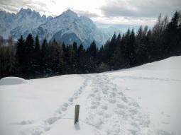 Deviazione nel bosco lungo il sentiero Cai 434.