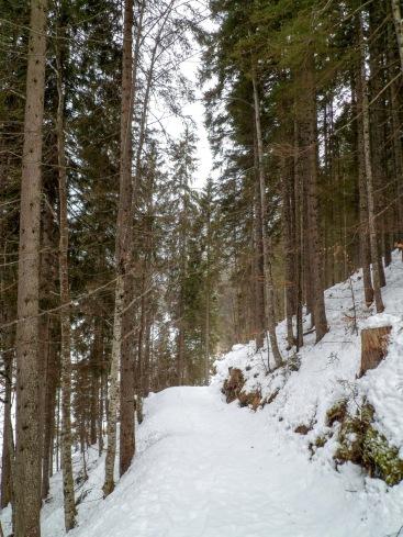 Lungo la pista forestale verso Malga Priu