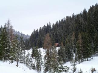 Lungo la pista forestale CAI 504A