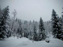 Lungo la pista forestale