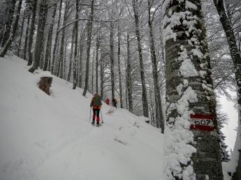 Salendo per il bosco lungo il sentiero CAI 607