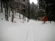 Scendendo verso Valbruna