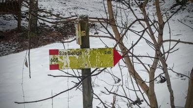 Il segnavia Cai posto all'inizio della forestale.