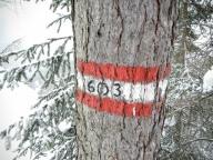 Il segnavia Cai posto circa nel punto dove la forestale diventa sentiero.