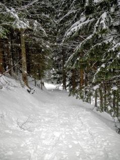 Il bosco a quota 1000 metri, che ci ha fornito riparo per il pranzo.