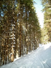 Lungo la pista forestale CAI 157