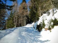 La pista forestale che sale a Sella Festons