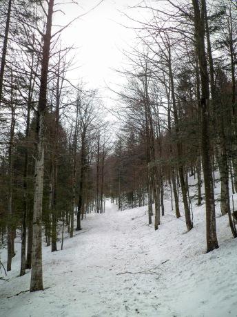 Si sale sulla pista forestale