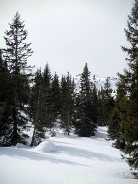 Nel bosco si intravede il Pal Grande
