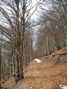 Salendo lungo la pista forestale CAI 826