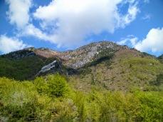 Monte Flop