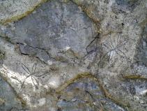Graffito con stelle alpine