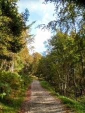 Tratto di pista forestale