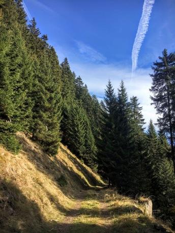 Pista forestale verso sella Collarice