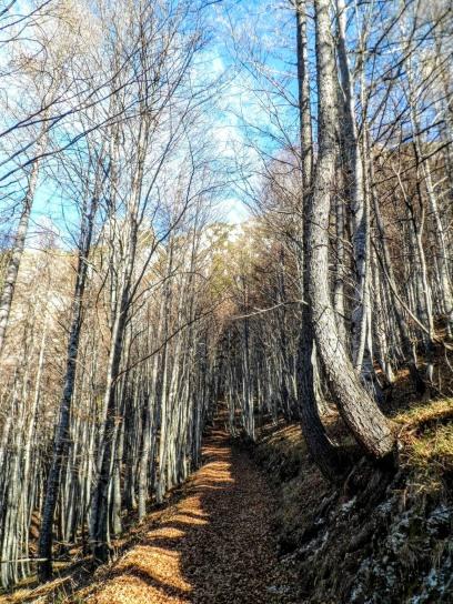 Il sentiero Cai 425.