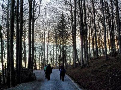 La forestale che conduce dal Rifugio Vualt al parcheggio a quota 1000.