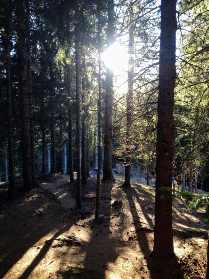 Sentiero CAI 152 nel bosco