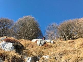 Si sale sulla ripida traccia sul versante sud della Pala d'Altei