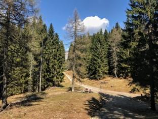La pista forestale che porta a casera Glazzat alta