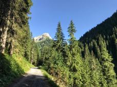 Lungo la pista forestale sentiero Cai 170.