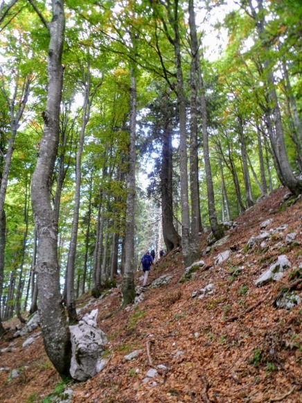 Il sentiero che sale verso il Veliki Polovnik