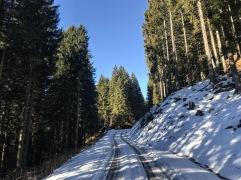 Lungo la strada che sale nella Foresta di Pramosio.