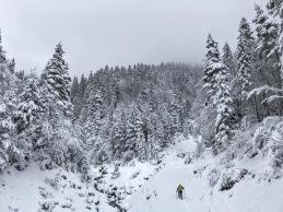 Il sentiero Cai 506 nel unto in cui finisce la strada forestale.