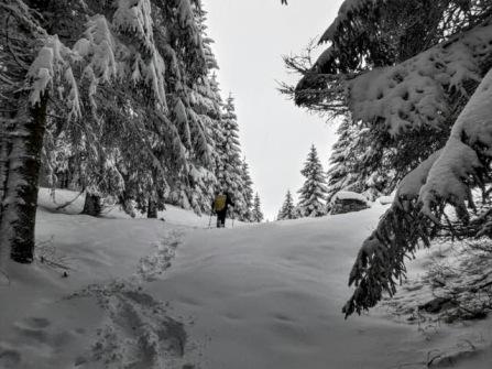 Uscita dal bosco a quota 1280m.