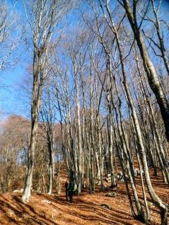 Sul sentiero CAI 819 verso il monte Ciaurlec