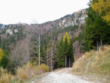 la pista forestle tra le casere Lius e Palis di Lius
