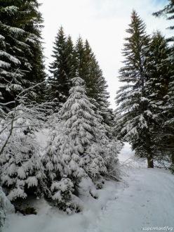 Deviazione sul sentiero che porta a malga Valdaier